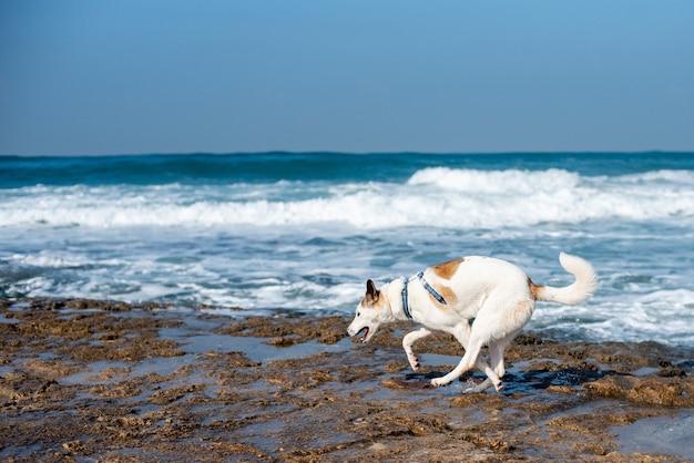 Cachorro branco correndo em uma praia cercada pelo mar sob um céu azul e luz do sol