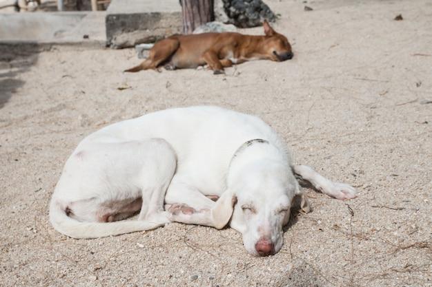 Cachorro branco relaxando na areia da praia