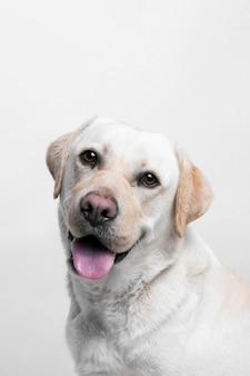Cachorro branco