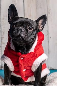 Cachorro bulldog preto com fantasia de natal