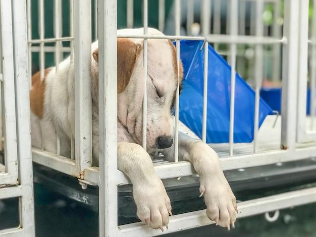 Cachorro cachorro dormir no caso