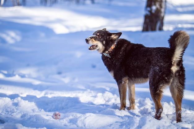 Cachorro caminha no parque no inverno
