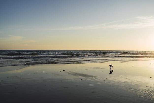 Cachorro caminhando na praia com as lindas ondas do mar