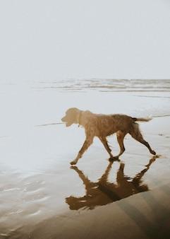 Cachorro caminhando na praia