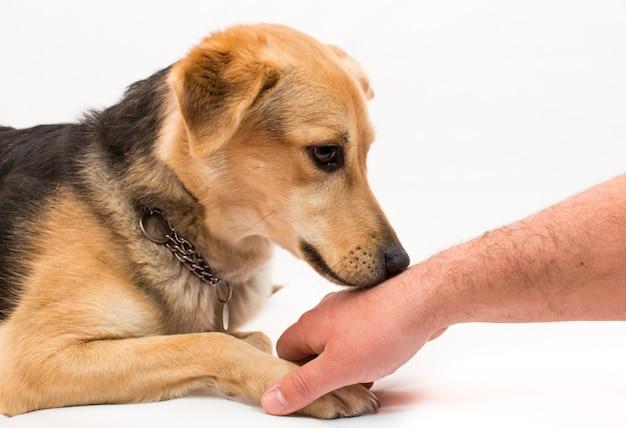 Cachorro cheirando a mão de um homem - adestramento de obediência