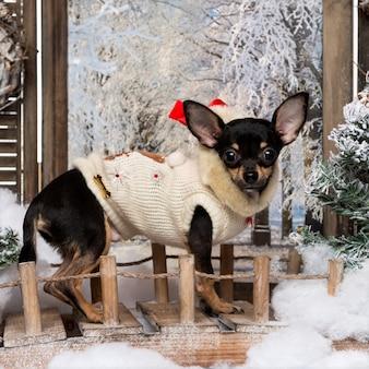 Cachorro chihuahua bem vestido em pé em uma ponte em um cenário de inverno,