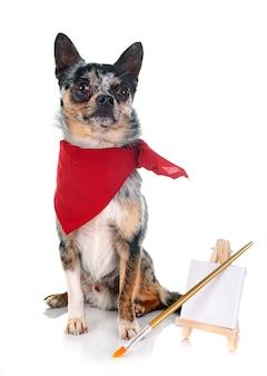 Cachorro chihuahua em estúdio