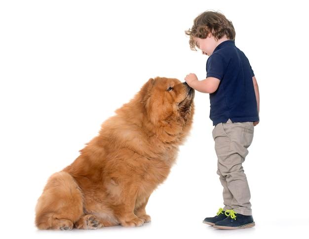 Cachorro chow chow e garotinho