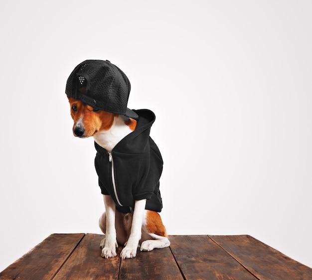 Cachorro com aparência de culpado, castanho e branco, com capuz preto e boné de caminhoneiro com malha nas costas em uma mesa de madeira rústica