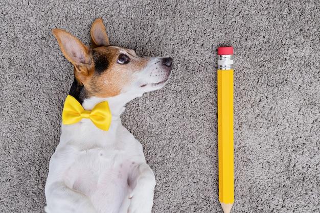 Cachorro com caneta amarela grande e arco amarelo amarrado