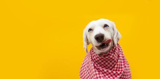 Cachorro com fome de retrato pronto para comer, lambendo com a língua seus lábios.