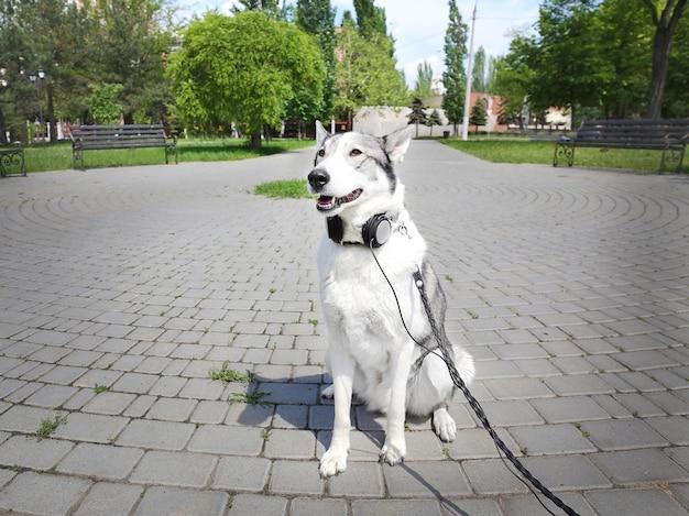 Cachorro com fones de ouvido no parque