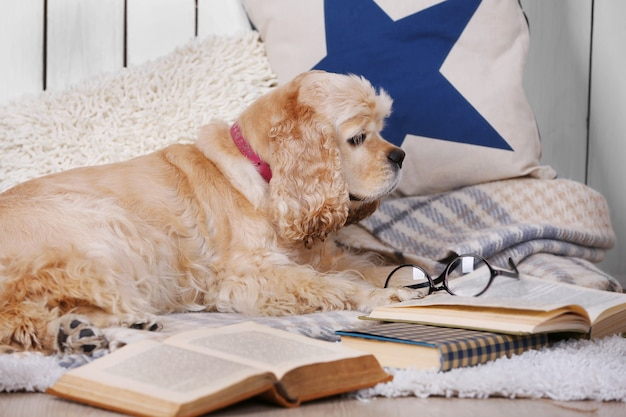 Cachorro com livros no sofá dentro