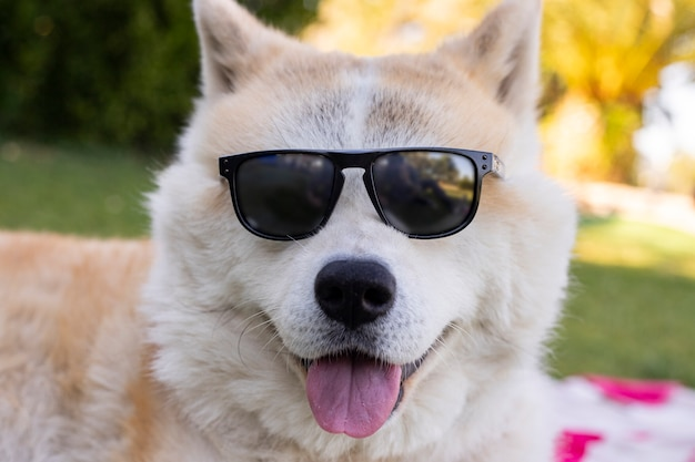 Cachorro com óculos de sol, conceito de verão feliz