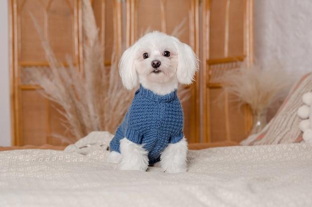 Cachorro com roupas da moda. cachorro vestido. roupas de cachorro. suprimentos para animais de estimação