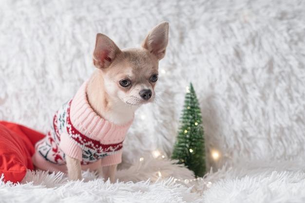 Cachorro com suéter de natal