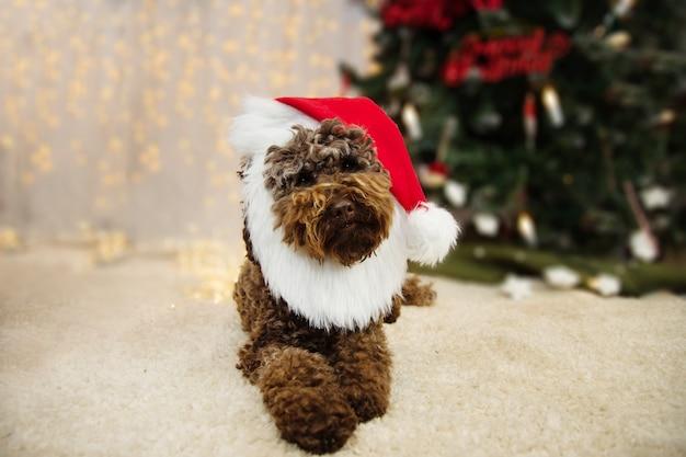 Cachorro comemorando férias sob as luzes da árvore de natal, vestindo uma fantasia de papai noel.