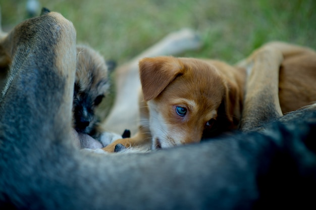 Cachorro comendo leite materno de fome