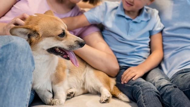 Cachorro corgi adorável close-up brincando com a família