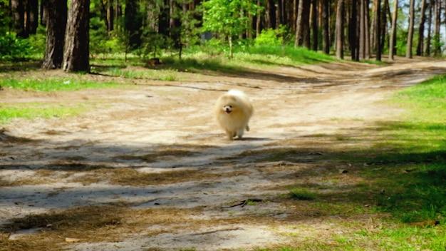 Cachorro corre ao longo da estrada da floresta