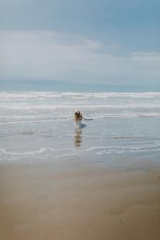Cachorro correndo ao redor do mar, rodeado pela praia sob um céu nublado
