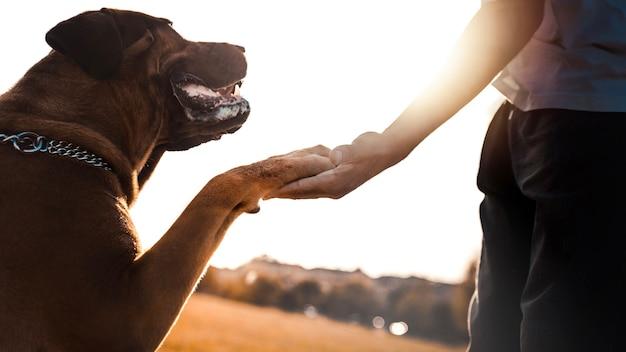 Cachorro dando uma pata para seu dono no parque ao pôr do sol - conceito de amor entre humanos e animais