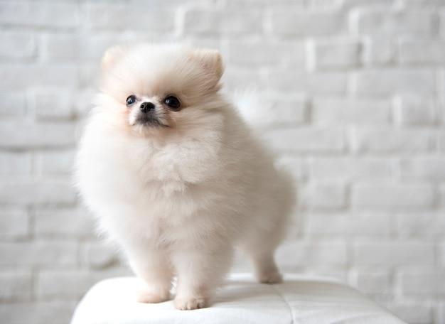 Cachorro de estimação raça animal retrato cachorrinho mammal