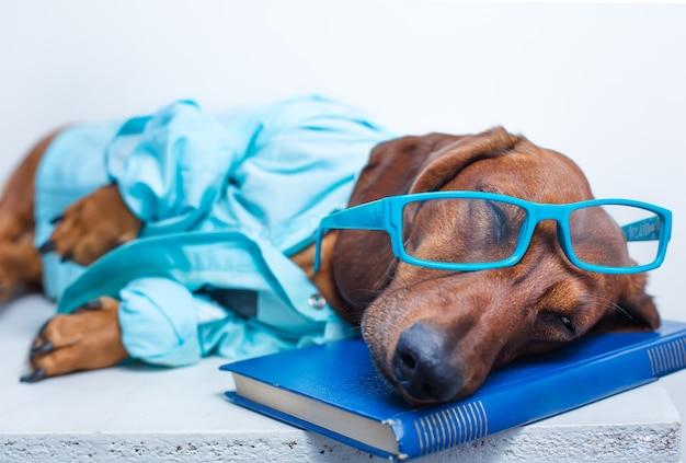 Cachorro de óculos e jaqueta dormindo sobre um livro