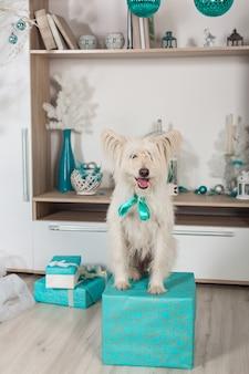 Cachorro de raça pura branco sentado em uma caixa de presente no fundo de decorações de natal