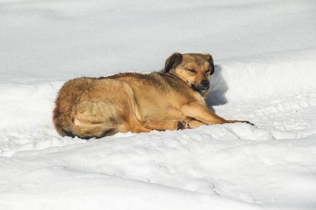 Cachorro de rua dorme na neve