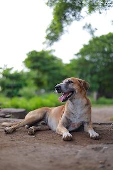 Cachorro de rua indiano deitado na estrada