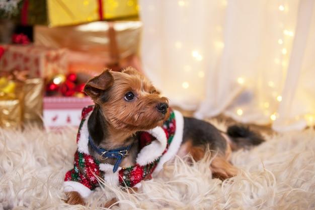 Cachorro debaixo da árvore de natal