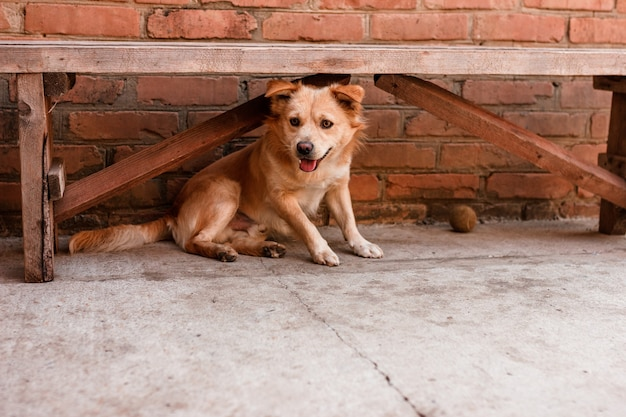 Cachorro debaixo do banco no quintal.