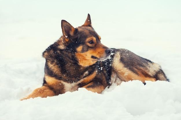 Cachorro deitado na neve