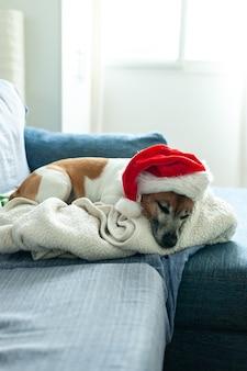 Cachorro deitado no sofá com um chapéu de papai noel