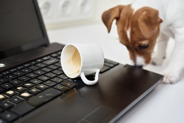 Cachorro derramando café no teclado do laptop