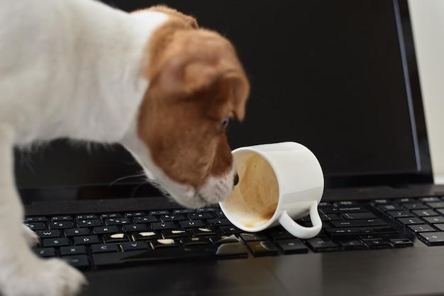 Cachorro derramou café no teclado do laptop