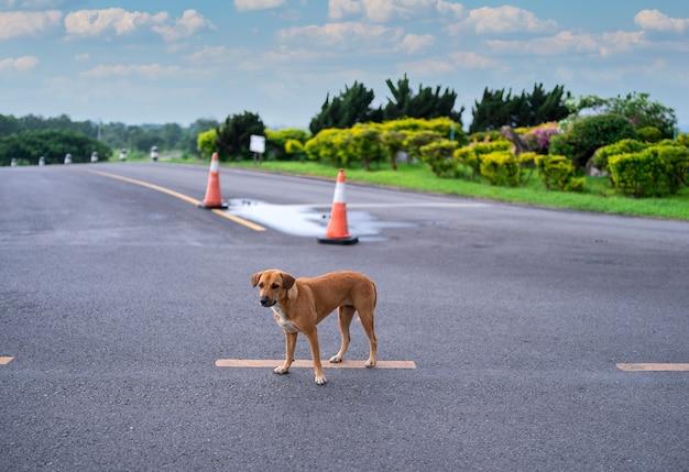 Cachorro desabrigado marrom tailandês sozinho em uma estrada vazia, cachorrinho fofo com cara triste