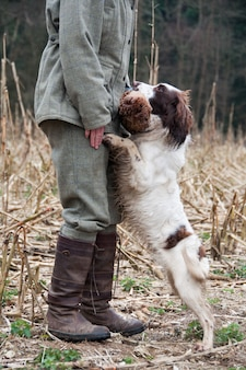 Cachorro domesticado batendo pular animais pássaro