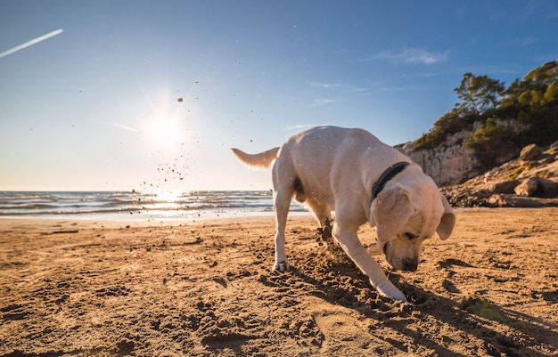 Cachorro doméstico fofo correndo e brincando na praia perto do oceano