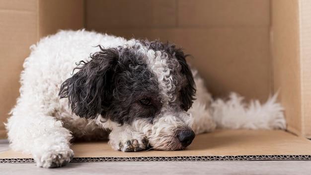 Cachorro dormindo em caixa de papelão