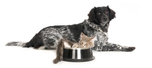 Cachorro e gatinho na tigela de comida de cachorro