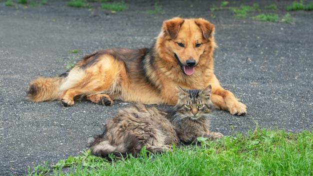Cachorro e gato em um bom relacionamento descansando no jardim