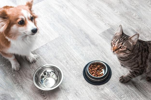 Cachorro e gato estão sentados no chão do apartamento diante de suas tigelas de comida.