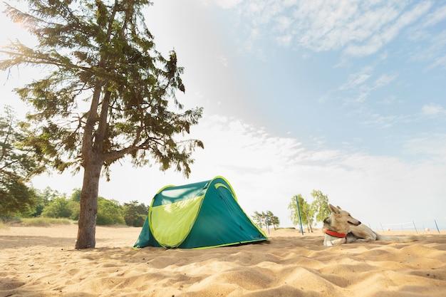Cachorro e tenda debaixo de uma árvore em uma praia arenosa