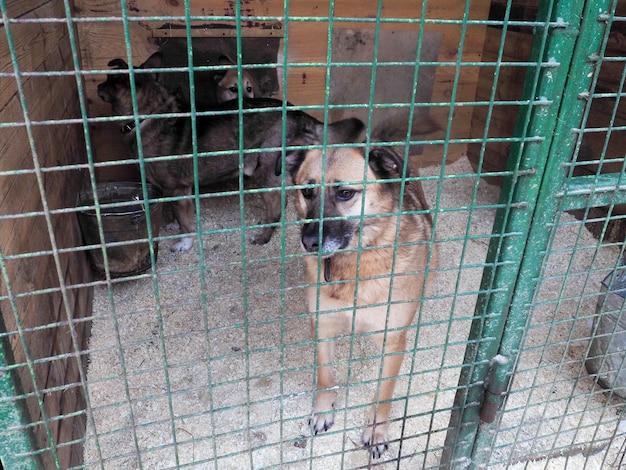 Cachorro em abrigo de animais, cachorro sem teto na gaiola