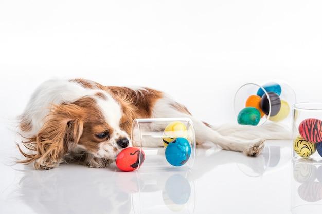 Cachorro em um estúdio