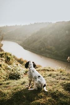 Cachorro em uma caminhada na natureza