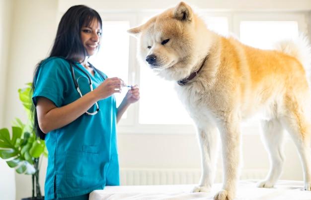 Cachorro em uma clínica veterinária sendo examinado por uma veterinária latina