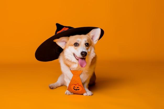 Cachorro em uma fantasia de halloween